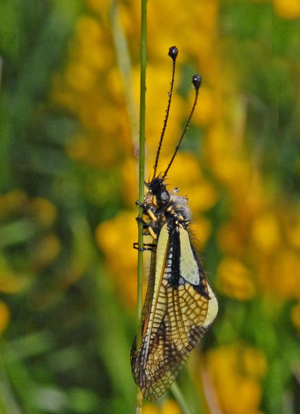 Papillons-insectes-2-1038a.jpg