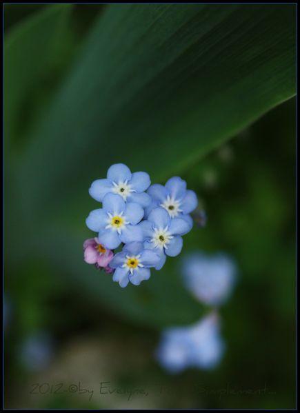 Macro---Fleurs--Plantes--Vegetaux-.-6072.JPG