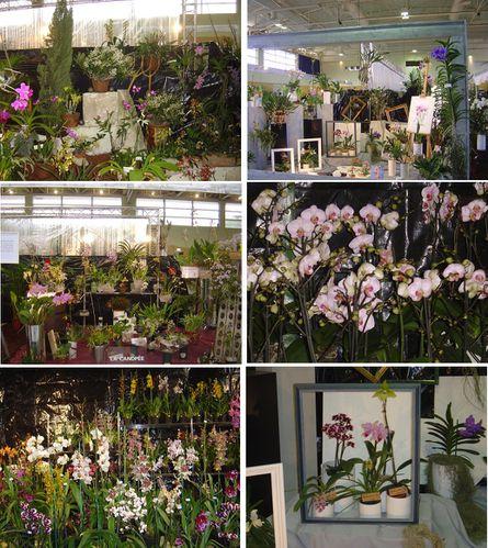 orchidees-1.jpg