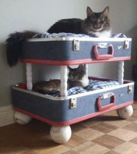 chats valises