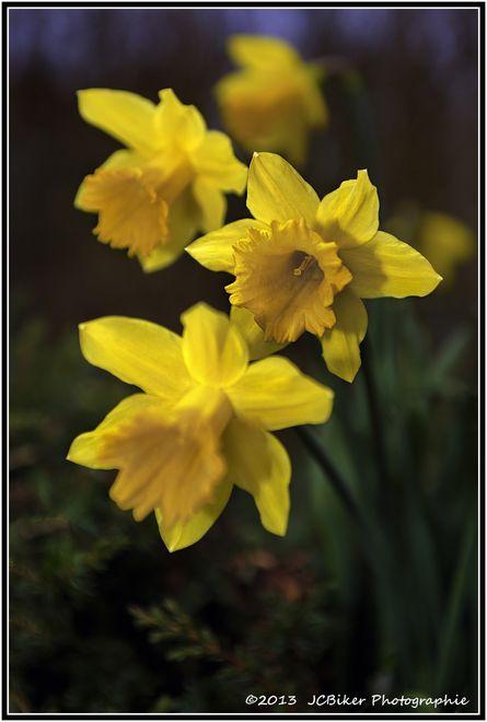 fleurs-3105.jpg