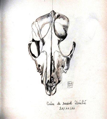 10-10-31 Crâne de renard (ébréché)