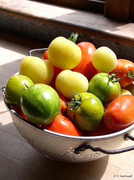 448px-Tomatoes.JPG