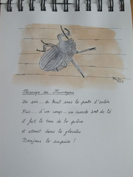 Page 14-Auvergne-Scarabee