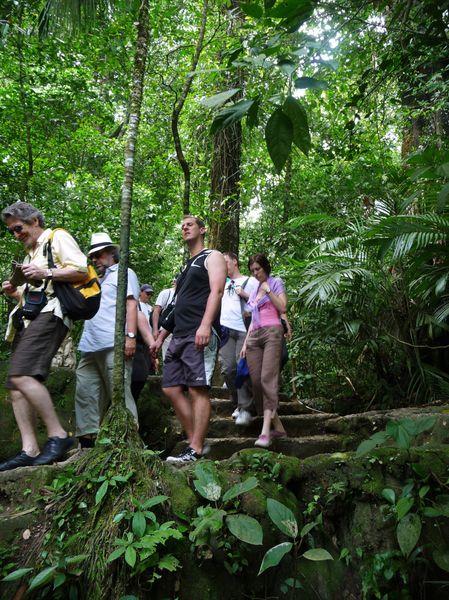 Jour 7 Palenque sentier forêt groupe