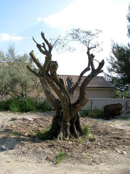 mai-2010-olivier.jpg