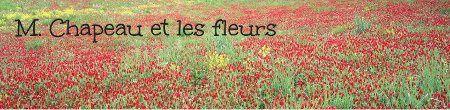 m-chapeau-et-les-fleurs.jpg