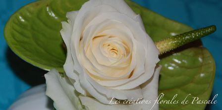 Rose et anthurium