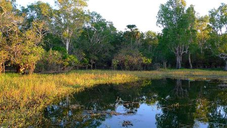Yellow-waters-Kakadu-Np--Small-.JPG