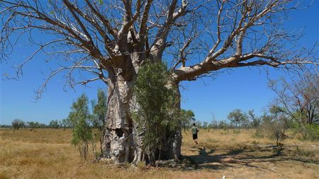 baobab--Small-.JPG