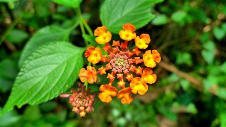 Fleur-Taman-Negara--Small-.JPG