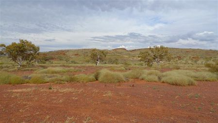 spinifex--2---Small-.JPG