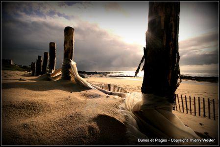 dunes et plages (3)
