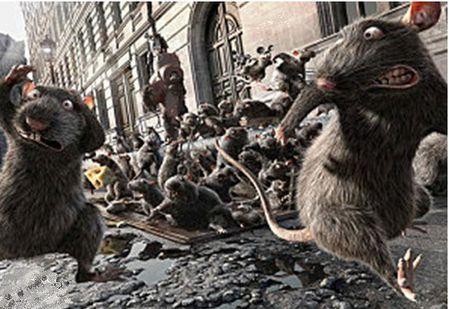 rats navire2jpg
