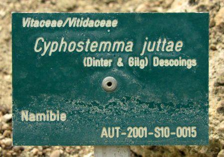 Auteuil-6453.JPG