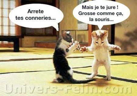blague 4 animaux