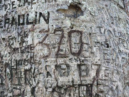 baobab-brazza-inscription-congo