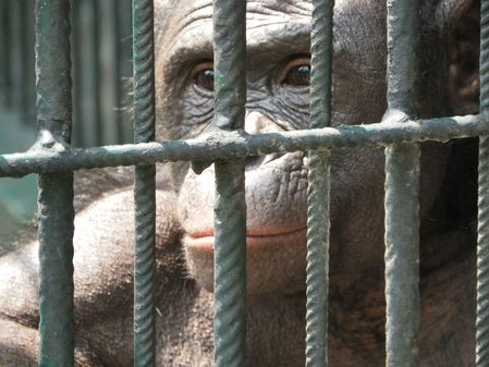 Bonobos-2.jpg