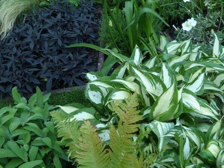 POCKET GARDENS ET HOSTA