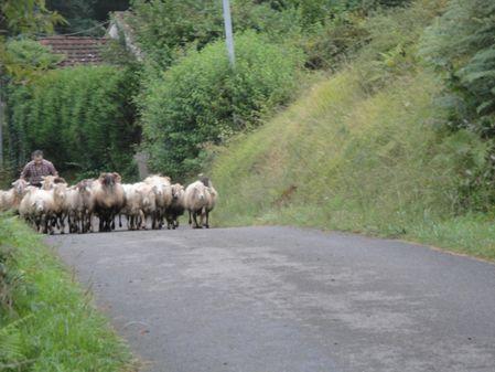 Eté 2014 : au pas de course, tout le monde regagne la bergerie