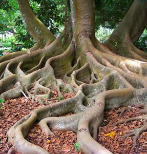 0 a roots