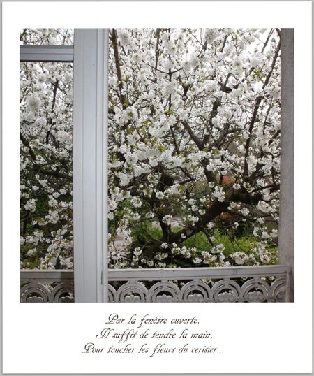 Macarons-a-l-ancienne-au-sesame-9312.JPG