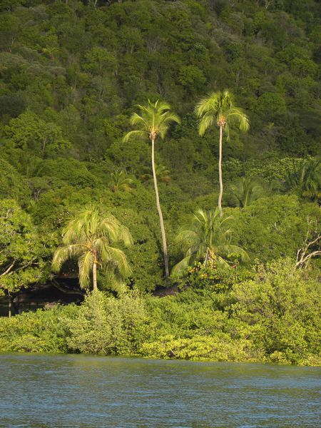 Bresil Bahia Cocotiers 11