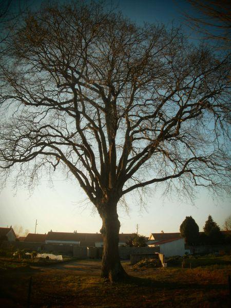 arbre_jardins_familiaux.jpg