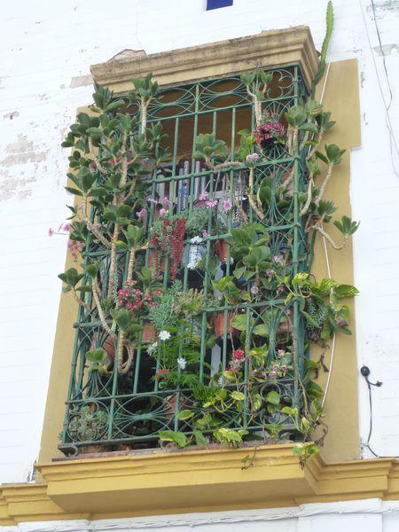 SEVILLA---balcon-fleuri.JPG