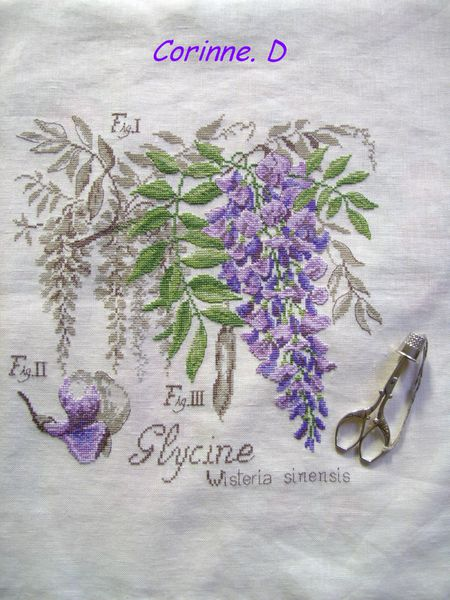 Copie de Glycine (3)