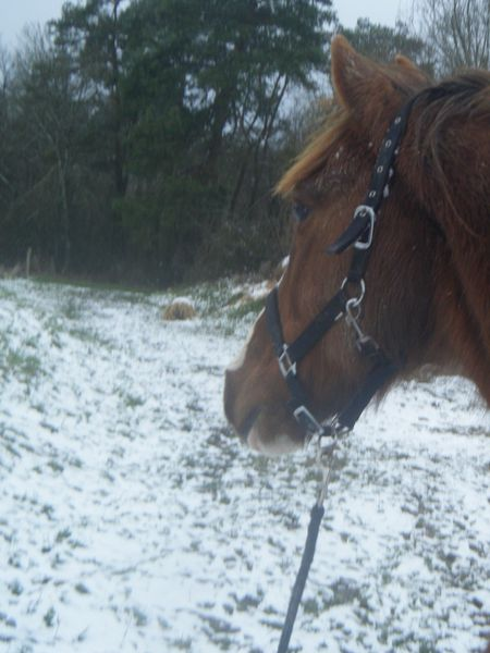 tete-cheval-neige.JPG