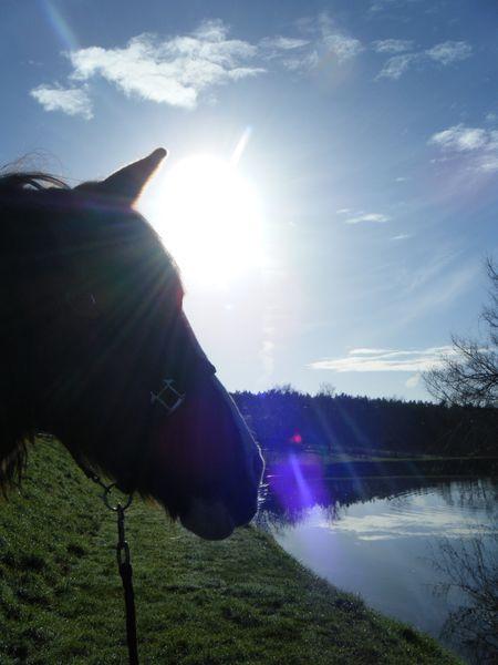 cheval-soir.JPG