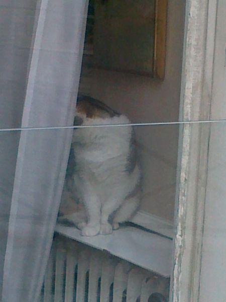 le-chat-rue-Madame-le-1er-mars-2012.jpg
