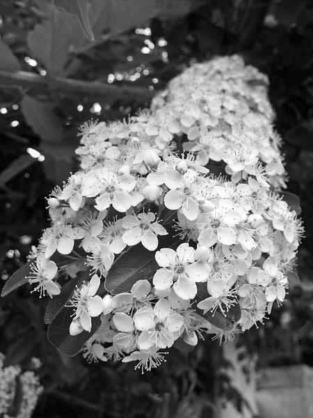 ChocoShoot-le-printemps-09.jpg