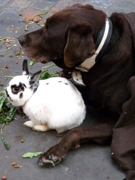 Chocoshoot-animaux-10--touche-pas-a-mon-lapin.jpg