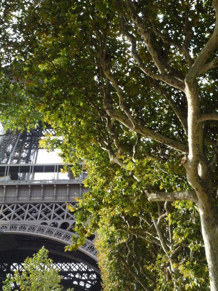 Tour Eiffel - Arbres