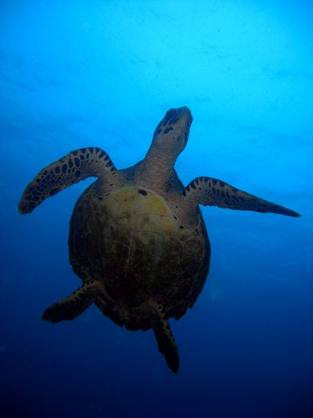 2010-03-10 tortue