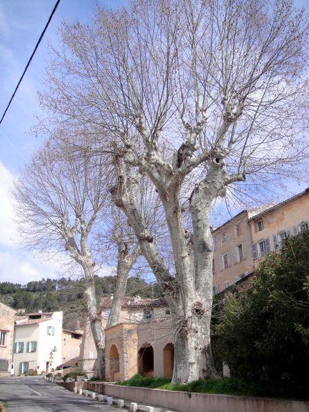 Cotignac-ville-arbres-9.JPG