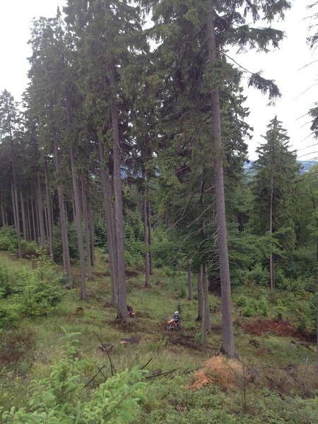 Im Wald 3