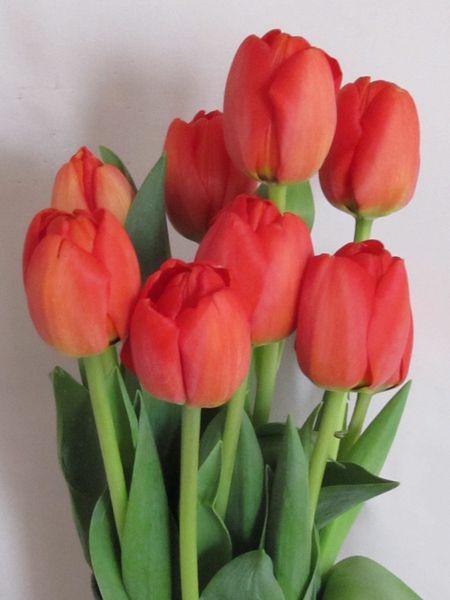 savons_i_tulipes_092.JPG