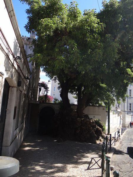 arbreL1