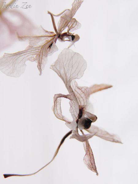 orchidée -libellule 2