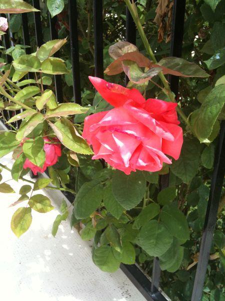 fleurs Madeleine 003