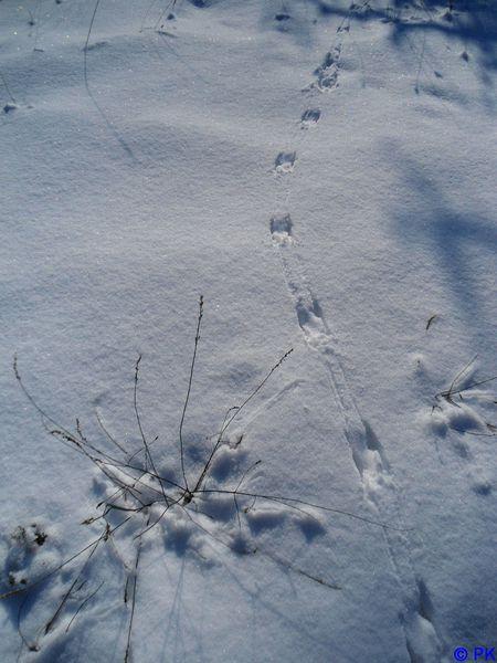 oiseau-dans-la-neige.jpg