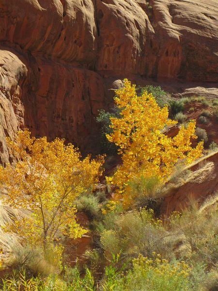 2012-10-26-Utah 1169 (Large)