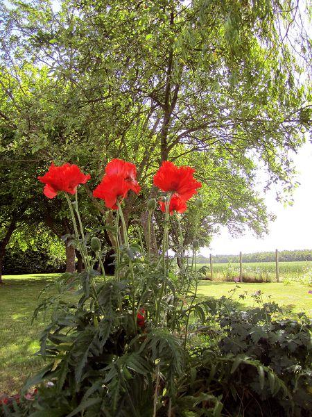 le-jardin-de-la-feuilleraie2.jpg