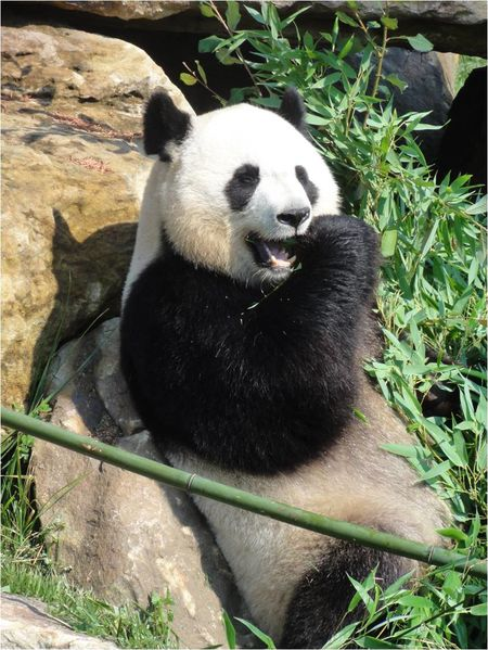 le zoo de beauval oui c 39 est g ant et pas que pour les pandas lucky sophie blog maman. Black Bedroom Furniture Sets. Home Design Ideas
