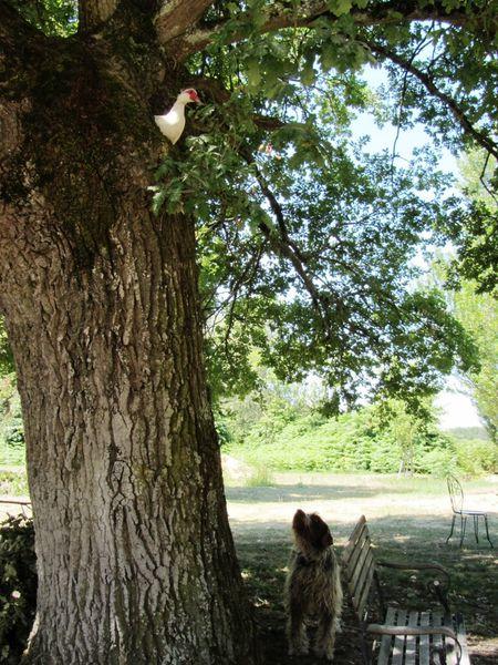 Reb-11-07-04-Coudraie-003-small.jpg