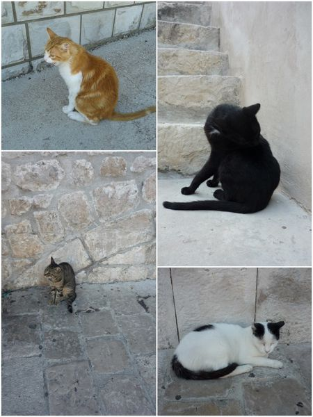 2013-08-14-7-Chats Dubrovnik 1