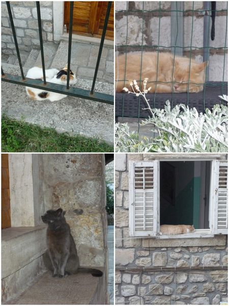 2013-08-14-7-Chats Dubrovnik 2